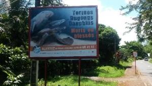 Tortues-Campagne-REMMAT-Mammifères-marins
