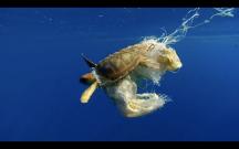sea-turtle-caught-in-plastics