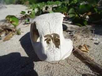 Pique-nique plage Badamiers (39)
